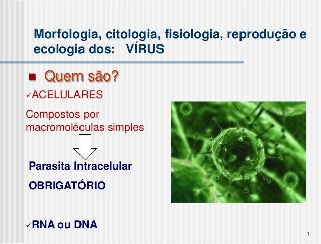 Morfologia, citologia, fisiologia, reprodução e ecologia dos: VÍRUS   Quem são?ACELULARESCompostos pormacromoléculas sim...