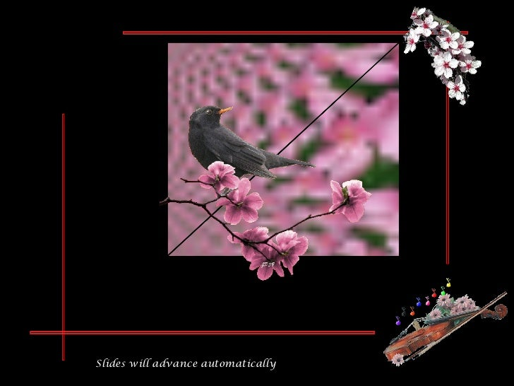 """Slides will advance automatically   Waiting for Spring """"Trees  in  flower"""""""