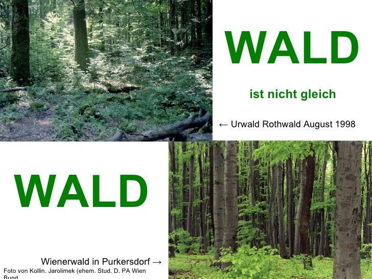 WALD ist nicht gleich WALD ←  Urwald Rothwald August 1998 Wienerwald in Purkersdorf  -> Foto von Kollin. Jarolimek (ehem. ...