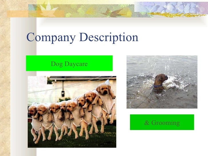 Dog day care business plan