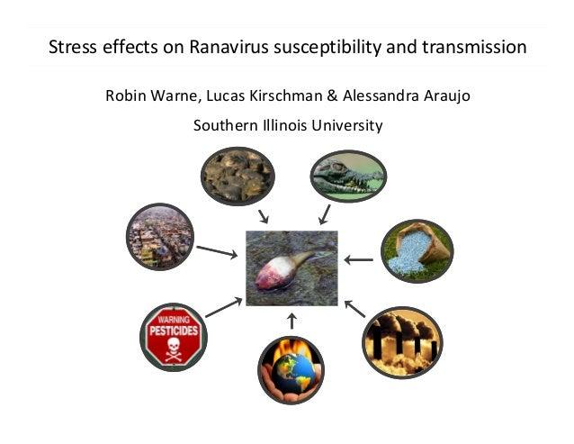 Stress effects on Ranavirus susceptibility and transmission Robin Warne, Lucas Kirschman & Alessandra Araujo Southern Illi...