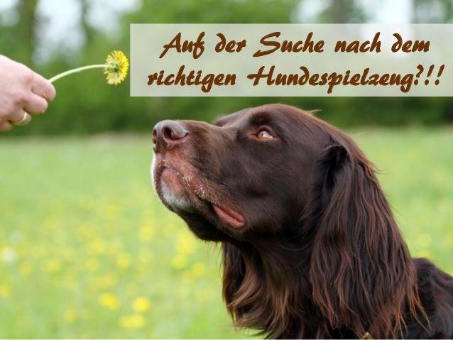 Auf der Suche nach dem richtigen Hundespielzeug?!!