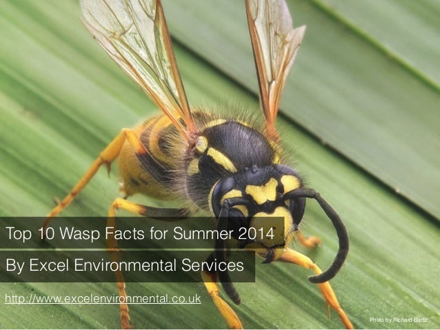 Top 10 Wasp Facts for  Summer 2014