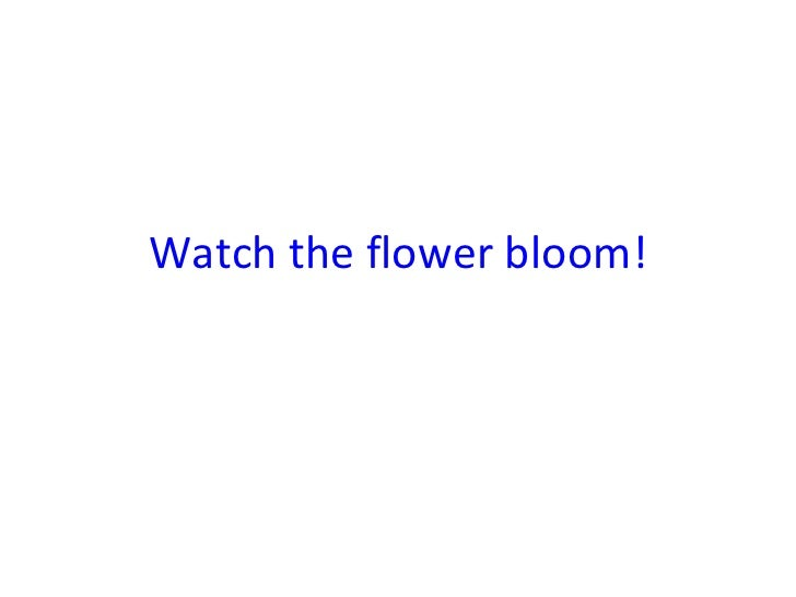 Watch the flower bloom!