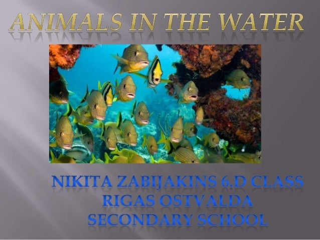 Water_Zabijakin Nikita