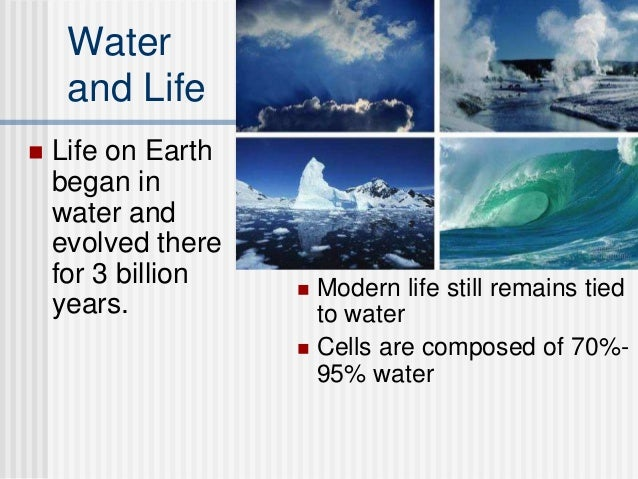 biological importance of water essay example