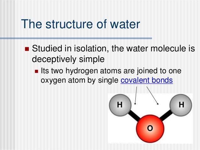 Ap biology essay on water