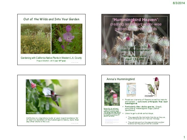 Planning 'Hummingbird Heaven' with water wise plants - 2014 - notes