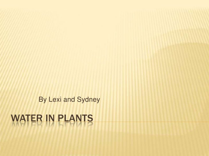 Water In Plants<br />By Lexi and Sydney<br />