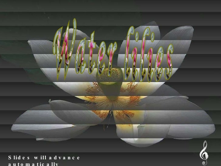 Water lilies Slides will advance automatically Water lilies