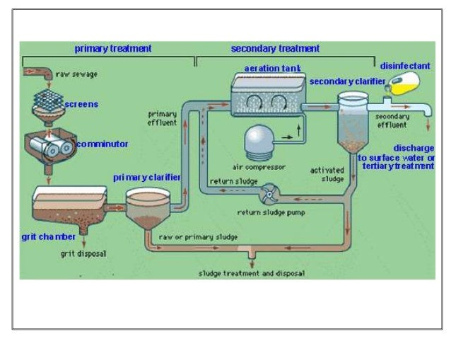 effect nontreated sewage