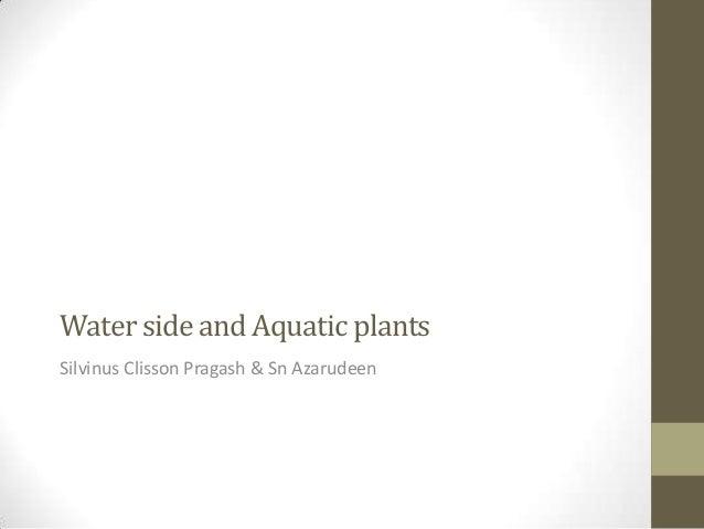 Water side and Aquatic plantsSilvinus Clisson Pragash & Sn Azarudeen