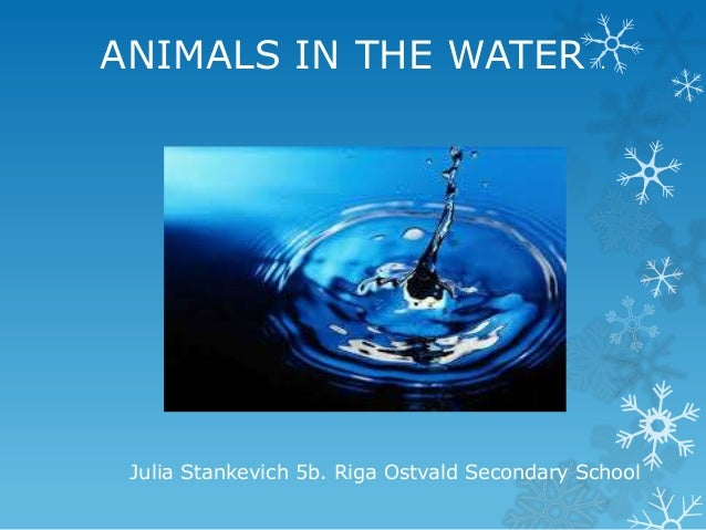 ANIMALS IN THE WATER  .  Julia Stankevich 5b. Riga Ostvald Secondary School