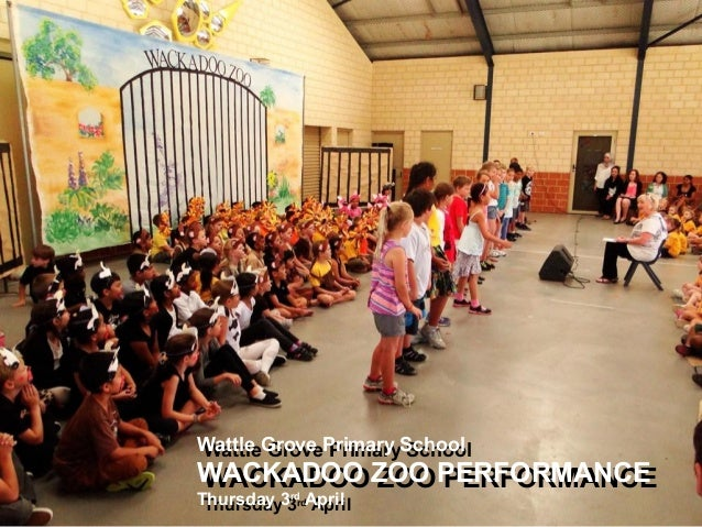 Wattle Grove Primary School WACKADOO ZOO PERFORMANCE Thursday 3rd April Wattle Grove Primary School WACKADOO ZOO PERFORMAN...