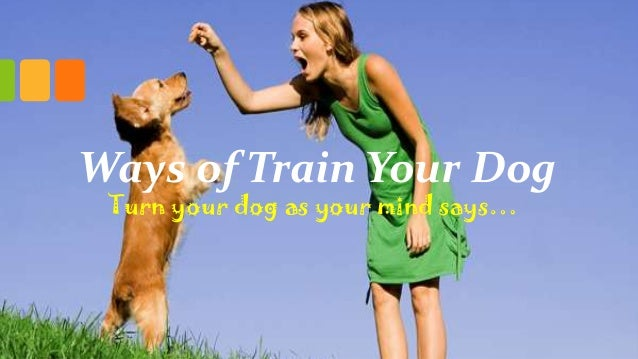 Ways of Train Your Dog Turn your dog as your mind says…