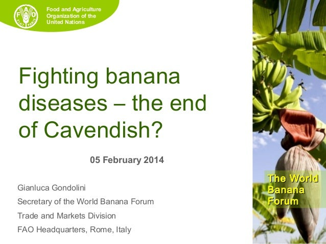 Food and Agriculture Organization of the United Nations  Fighting banana diseases – the end of Cavendish? 05 February 2014...