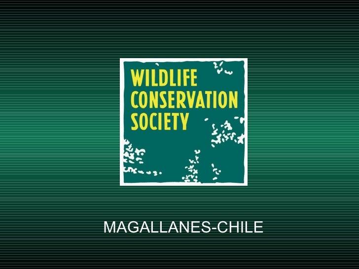 MAGALLANES-CHILE