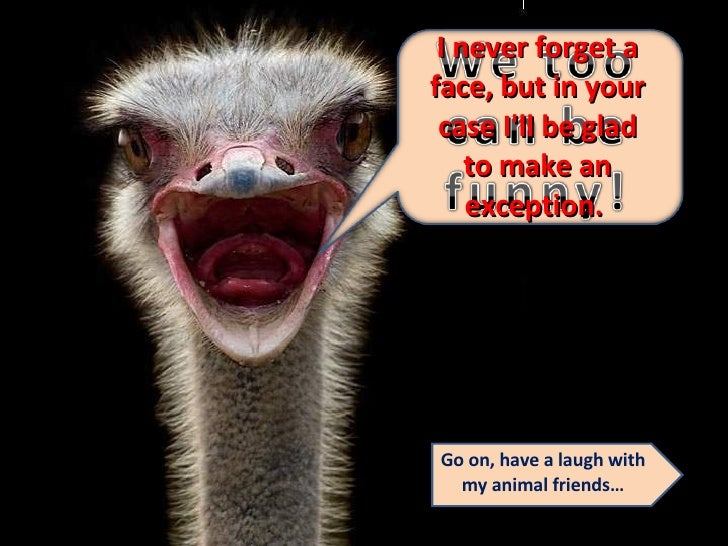 I never forget a face, but in your case I'll be glad to make an exception.  Go on, have a laugh with my animal friends…