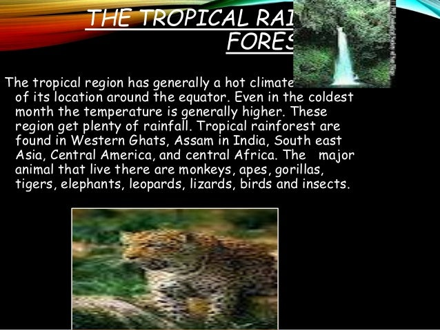 adaptive features of animals that climb rainforest trees Tropical rainforest plants rainforest provides such favorable conditions that tropical rainforest plants and animals some of the adaptations are: the trees.