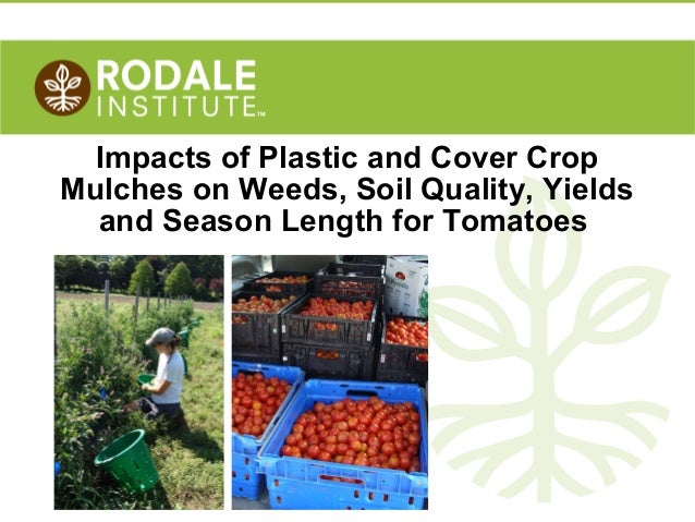 ©2010 Rodale Institute Impacts of Plastic and Cover Crop Mulches on Weeds, Soil Quality, Yields and Season Length for Toma...