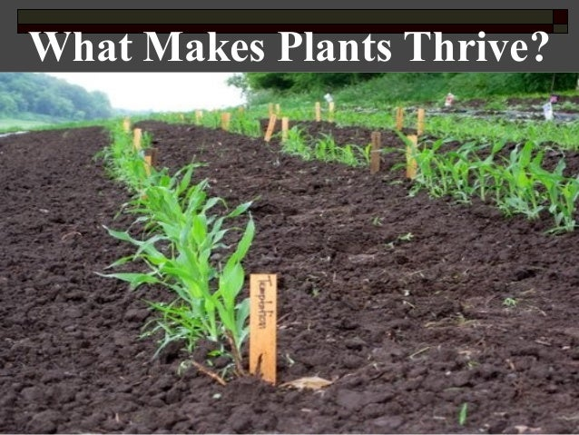 What Makes Plants Thrive?