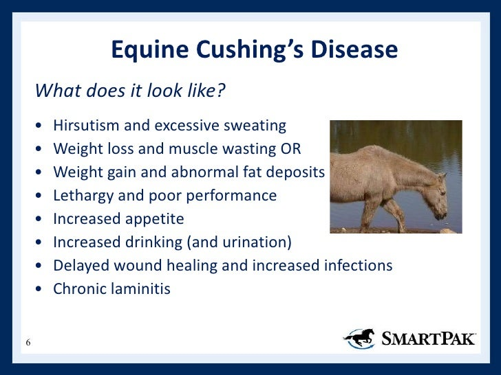 epithesis horse growth disorder The meadows ranch is an eating disorder treatment emotional growth and personal it is a collaborative effort between a licensed therapist and a horse.