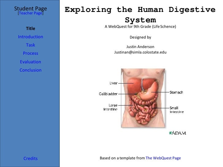 Exploring the Human Digestive System Student Page Title Introduction Task Process Evaluation Conclusion Credits [ Teacher ...