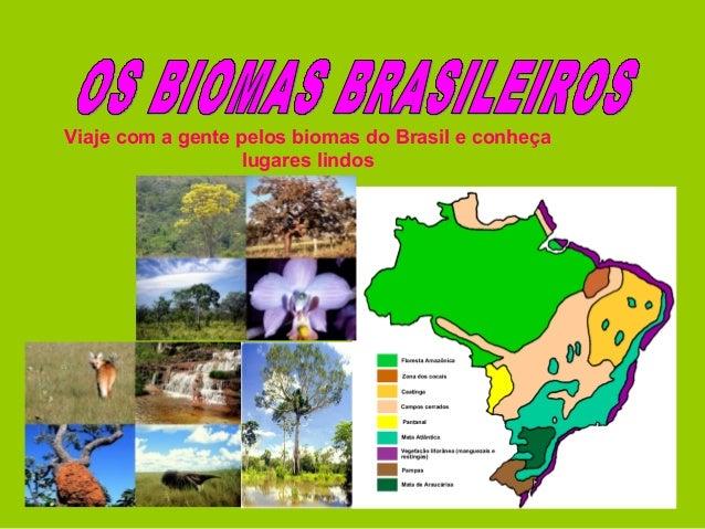 Viaje com a gente pelos biomas do Brasil e conheça lugares lindos