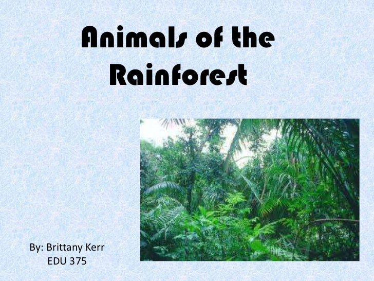 Animals of the Rainforest<br />By: Brittany Kerr<br />EDU 375<br />