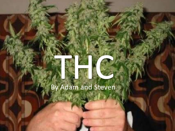 THC<br />By Adam and Steven<br />