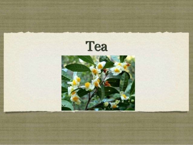 Week 7 tea   power point