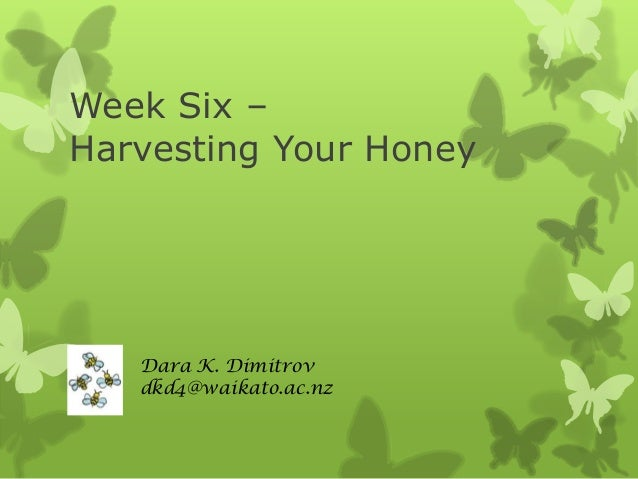 Week Six – Harvesting Honey from Your Bee Hive
