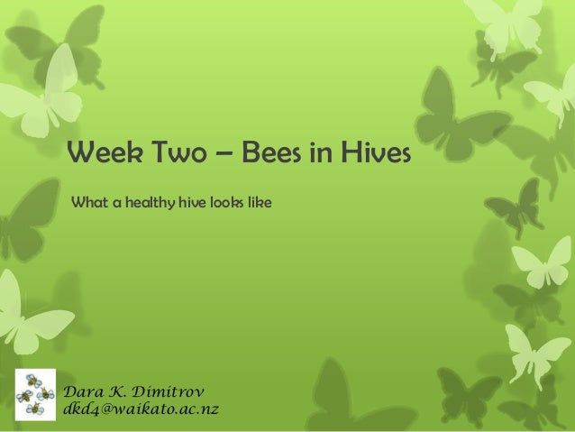 Week Two – Bees in Hives What a healthy hive looks like  Dara K. Dimitrov dkd4@waikato.ac.nz