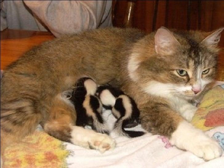 Weirdest Mothers In Animal Kindom