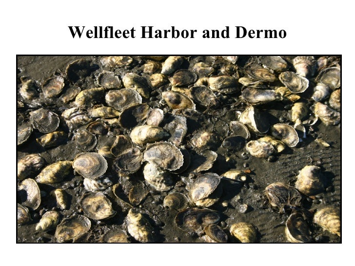 Wellfleet Harbor and Dermo PICTURE AND NOTES