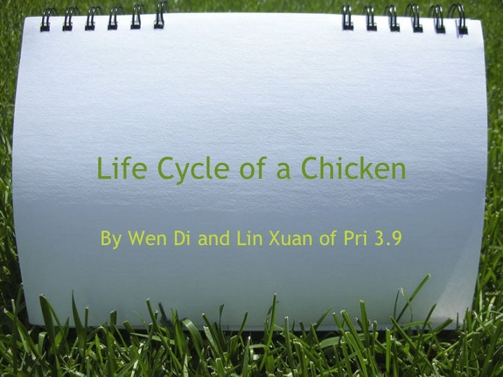 Life Cycle of a Chicken By Wen Di and Lin Xuan of Pri 3.9