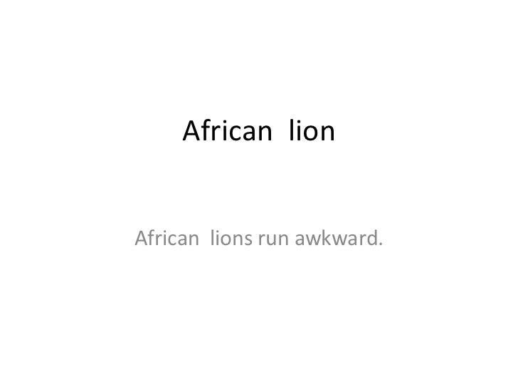 African  lion African  lions run awkward.