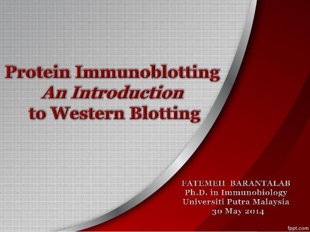Protein Immunoblotting- An Introduction  to Western Blotting