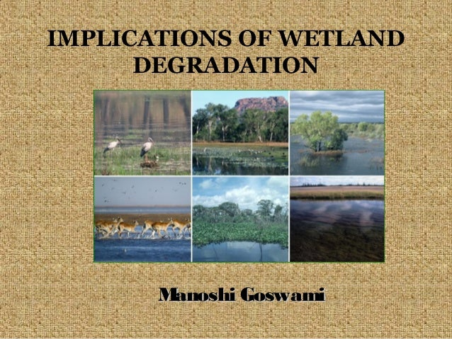 IMPLICATIONS OF WETLAND DEGRADATION  M anoshi Goswami