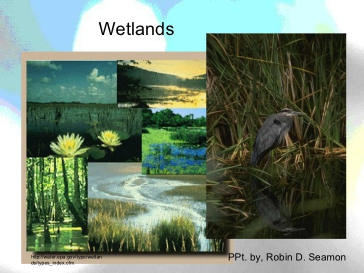 Wetlands:  notes on different wetland types, and organisms' adaptations to surviving there, reasons to save with video links