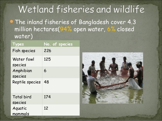 wetlands of bangladesh Bangladesh country profile bangladesh is a key us strategic partner in south asia  near 28 forests and wetlands new.