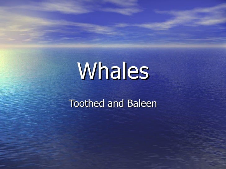 Whales Toothed and Baleen
