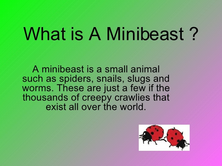 What Is A Minibeast