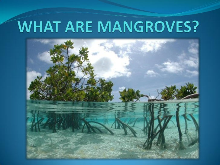 What Are Mangroves?. Centos Ddos Protection Dentist In La Jolla Ca. E Commerce Website Cost Best Hotel In Chengdu. University Of Michigan Distance Learning. Back Up Your Hard Drive Mortgage Broker Tools. Solarwinds Real Time Bandwidth Monitor Credential Test Failed. Silicone Medical Devices Palm Beach Law Firms. Marriage Counseling Brighton Mi. Colleges In Little Rock Music Business Salary