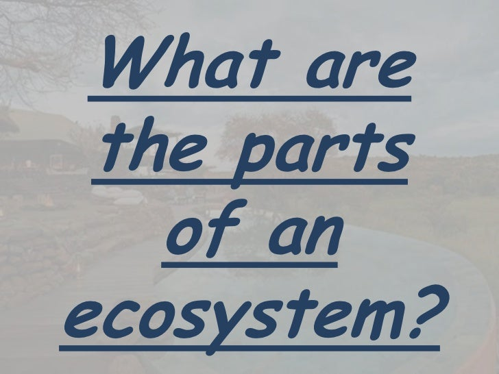 What are the parts of the ecosystem