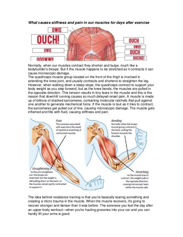 What causes stiffness and pain in our muscles for days after exercise Normally, when our muscles contract they shorten and...