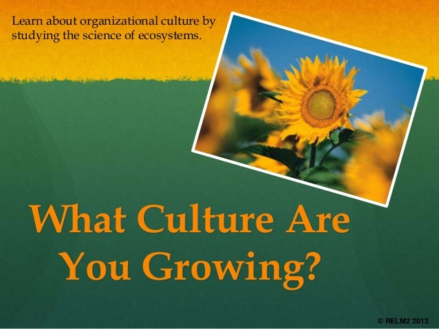 Learn about organizational culture by studying the science of ecosystems.  What Culture Are You Growing? © RELM2 2013