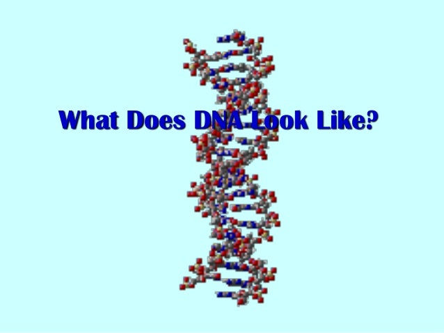 What Does DNA Look Like?