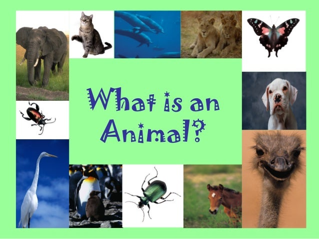 What is an animal