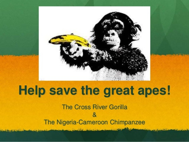 Help save the great apes! The Cross River Gorilla & The Nigeria-Cameroon Chimpanzee
